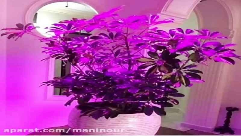بهترین نور مصنوعی برای رشد گیاه - محصول مانی نور
