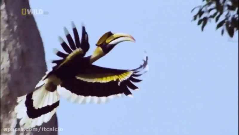 مستند حیات وحش - تایلند سرزمین زیبای وحشی (با کیفیت)