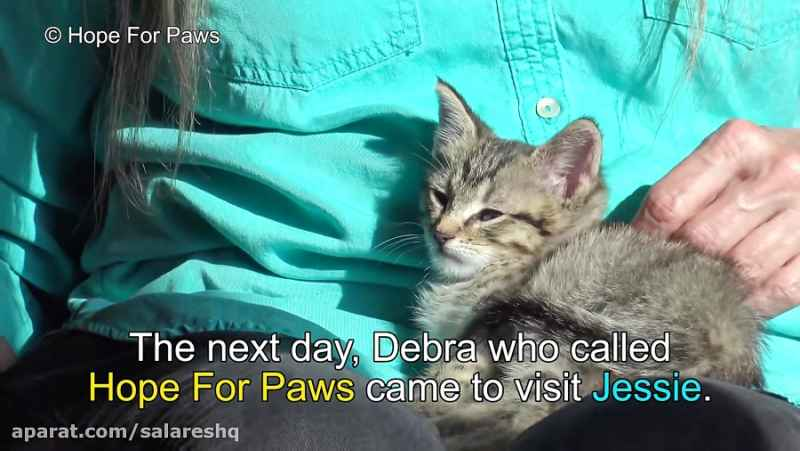 عملیات بسیار گریه آور و دیدنی نجات بچه گربه خوشگل افتاده در چاه ده متری آب HD