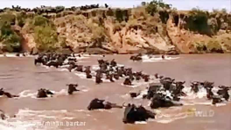 رودخانه« مارا » معروف به رودخانه مرگ