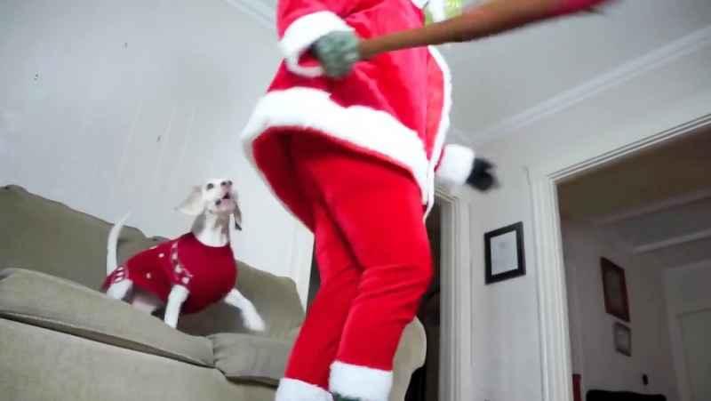 سگها ، توله سگ و گرینچ کریسمس را خراب می کنند: سگ های خنده دار میمو ، پنی و پای