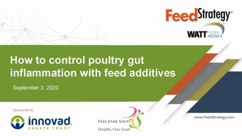 Webinar: Controlling Chronic Inflammation With Feed Additives