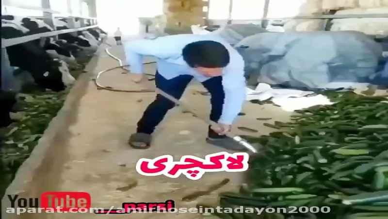 گاوداری لاکچری