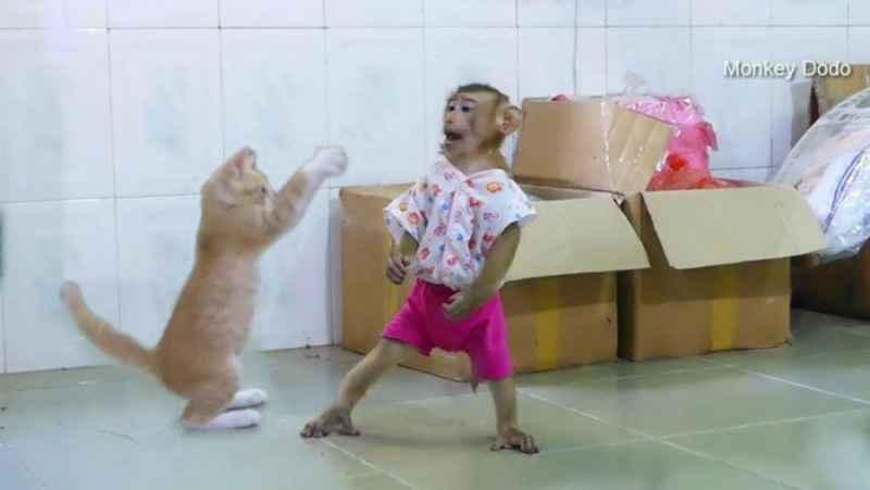بازی و دوستی میمون کوچولو و گربه کوچولو !