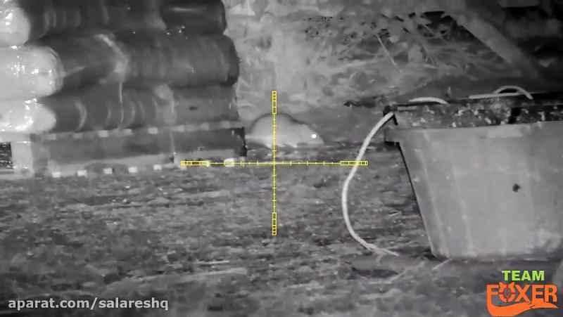 حمله گسترده موشها به گاوداری و دست به اسلحه دیددرشب شدن دامدار و کشتار موشها HD