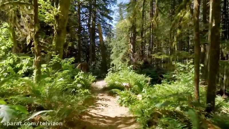 سه ساعت پیاده روی در اعماق جنگل بکر با موسیقی پیانو   (ریلکسیشن در طبیعت 128)