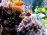ماهی ها و گیاه های زیبای آب شور