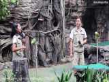 طوطی های سخنگو در سافاری ورلد بانکوک، تایلند