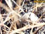 تلاش تحسین برانگیز لاکپشت برای محافظت از تخم هایش در برابر مار
