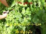 Chicken Grill| مرغ کبابی ازآشپزخانه خوراک ایرانی  - آموزش پرمزه و کبابی کردن سی