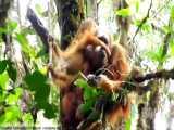 10 گونه حیوان زیبا که تا سال 2030 منقرض خواهد شد