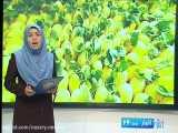 گزارش خبری صداوسیما ازنخستین خریزه درختی گرگاب خبرنگار صداوسیما حمید نظری