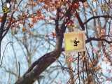 چرا منافقین با غدیر مقابله کردند ؟ | سفرنامه غدیر -  شبکه جهانی بیت العباس علیه السلام -  جلسه چهارد