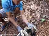 نجات توله سگ زخمی شده توسط مار که داره گریه می کنه :(