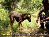 نجات سگ گیر کرده در ماده چسبناک و تغییر زندگی او