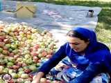 باغ سیب اشنویه