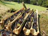 بهترین تله ماهیگیری بامبو تله ماهیگیری  با بامبو سبز. ماهی و گربه ماهی Singi