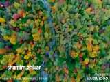 بازی  رنگ ها در طبیعت زیبای خدا