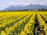 دو ساعت ویدیوی آرامش بخش از باغ گلهای زرد رنگ | (ریلکسیشن در طبیعت 18)