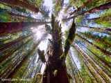 سه ساعت ویدیوی آرامش بخش از اعماق جنگل بکر | (ریلکسیشن در طبیعت 36)