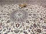 بازی بچه گربه ی شیطون من